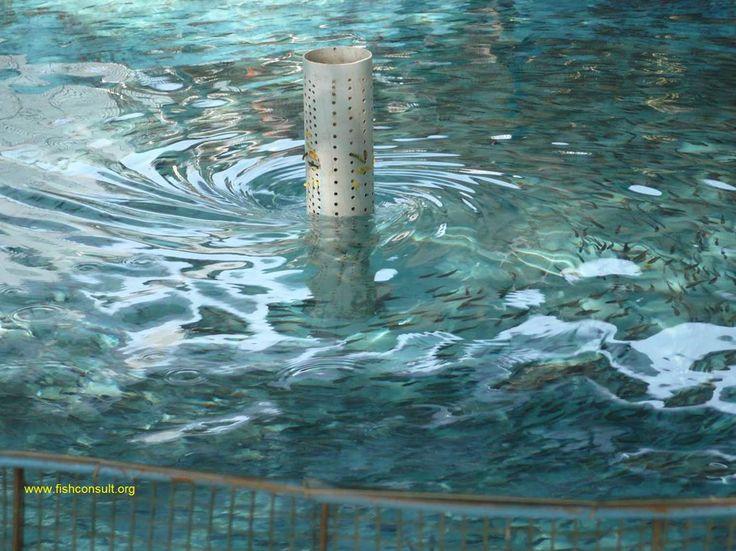 41 best images about aquaculture on pinterest mykonos for Aquaculture fish tanks