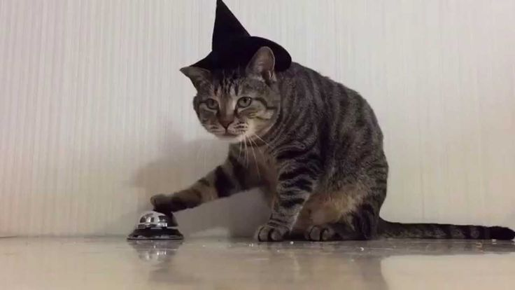 【Too cute】cat ring the bell to prompting the bait.【Funny Cat】