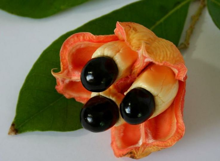 Ackee is the national fruit and it's delicious ~ Jamaica: Kool Jamaica, National Fruit, National Symbols, Salts Fish, Exotic Fruit, Jamaica National, Breads Fruit, Jamaican Flower, Cod Fish