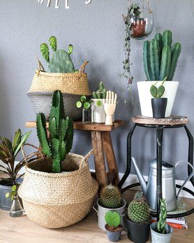 Zimmerpflanzen - für ein grünes Zuhause! #urbanjungle #zimmerpflanzen #pflanzen #pflanzendeko #dekoideen #plants #indoorplants #green #grün #decor #deko #home #interior #urbanjungle #cactus #kakteen #kaktus