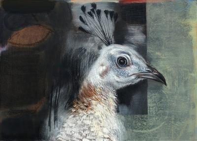 White Peacock - Tom Wood #peacock #bird #painting