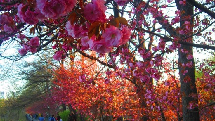 New York, Dusk through the trees