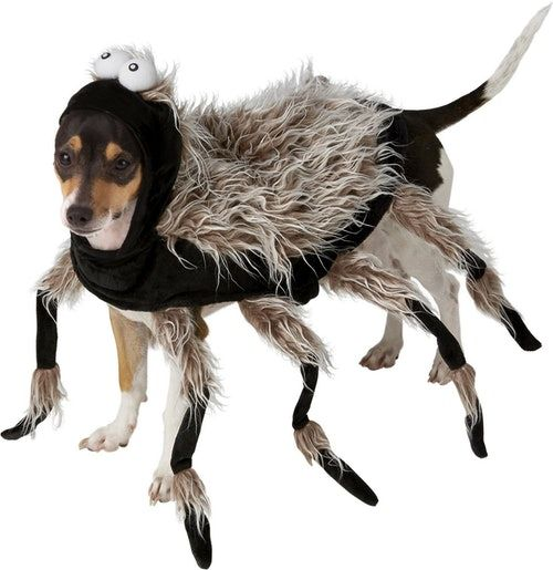 Image Result For Dog Costumes Chia Pet Spider Dog Dog