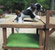 Dog Playground - A Dog Obstacle Course provides your dog with challenging activities that will keep an active dog engaged and help to build confidence in nervous dogs. Check out this site for ideas on what can be built in your own backyard.
