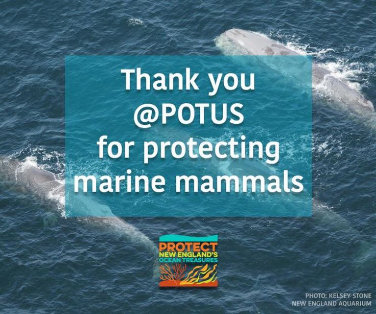 Thank you @BarackObama @SenBlumenthal and John Kerry for establishing the Northeast Canyons and Seamounts Marine National Monument! This is the first Marine Monument in the Atlantic ocean. Marine reserves allow us to save and study fragile ecosystems threatened by #climatechange. #ActOnClimate #SaveOceanTreasures