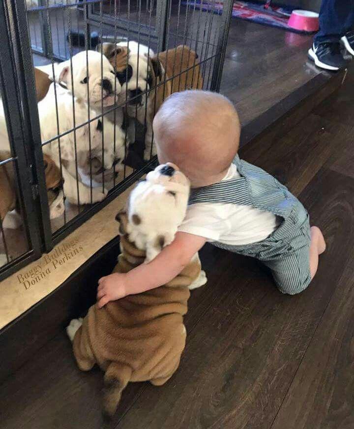 Bulldog and baby pals for life