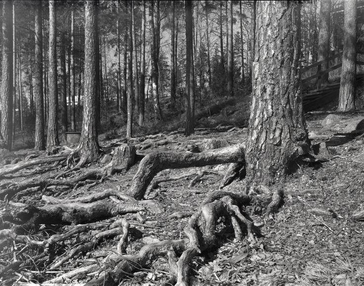 #Intrepid Camera #Fujinon 150mm #Fomapan 400 #Asikkala #Pulkkilanharju #Suomi #Finland