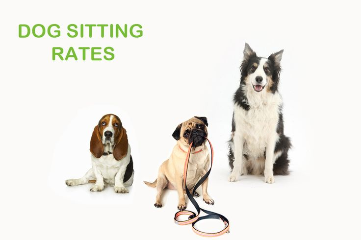 Dog Sitting Rates: How to Measure them easily