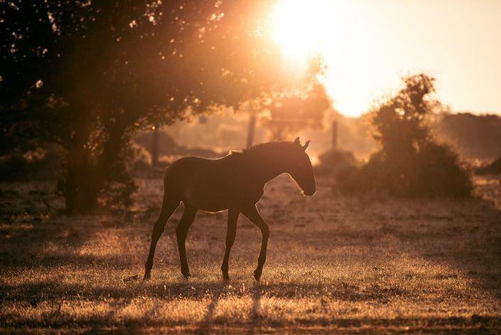 Fotos Pferde In Der Natur I In 2020 Pferde Pferde Fotografie