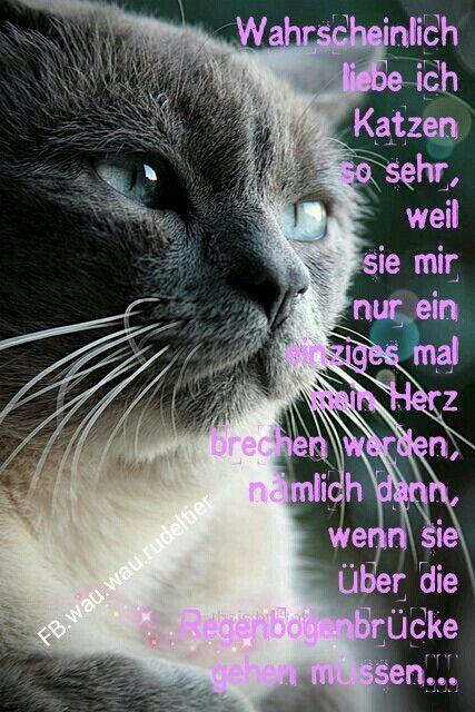 Wahrscheinlich liebe ich Katzen so sehr, weil sie mir nur ein einziges mal mein Herz <3 brechen werden, nämlich dann, wenn sie über die Regenbogenbrücke gehen müssen... © FB.wau.wau.rudeltier
