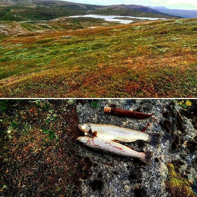 #kilos#ørret#trout#kobbåvatnet#beiarn#mat#food#fishing#tenting#hiking#visitnorway#utno#høst#autumn🍁#telttur#beautifull#perfection#northernnorway#norway#nordnorge#ig_nordnorge#nature#outdoorlife#adventure