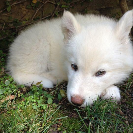 Wolf, so precious ~