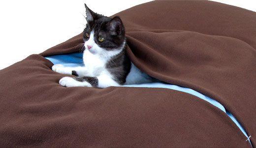 Katzendecke und Katzenkissen
