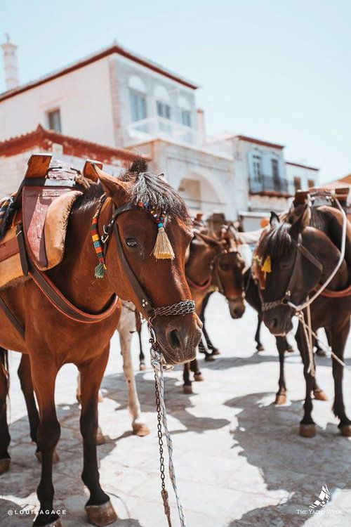 Donkeys in Hydra, Greece   Thinking about doing The Yacht Week? Here's the ultimate guide to The Yacht Week Greece! Full ofday parties, beautiful sunsets in jaw-dropping locations, and the world famous Nikki Beach party!