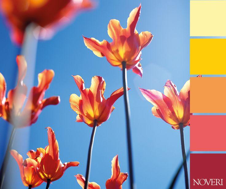 Spring is coming!  #colors #spring #flower #sky #beautiful #yellow #pink #red #orange #blu