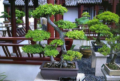 bonsai-tips