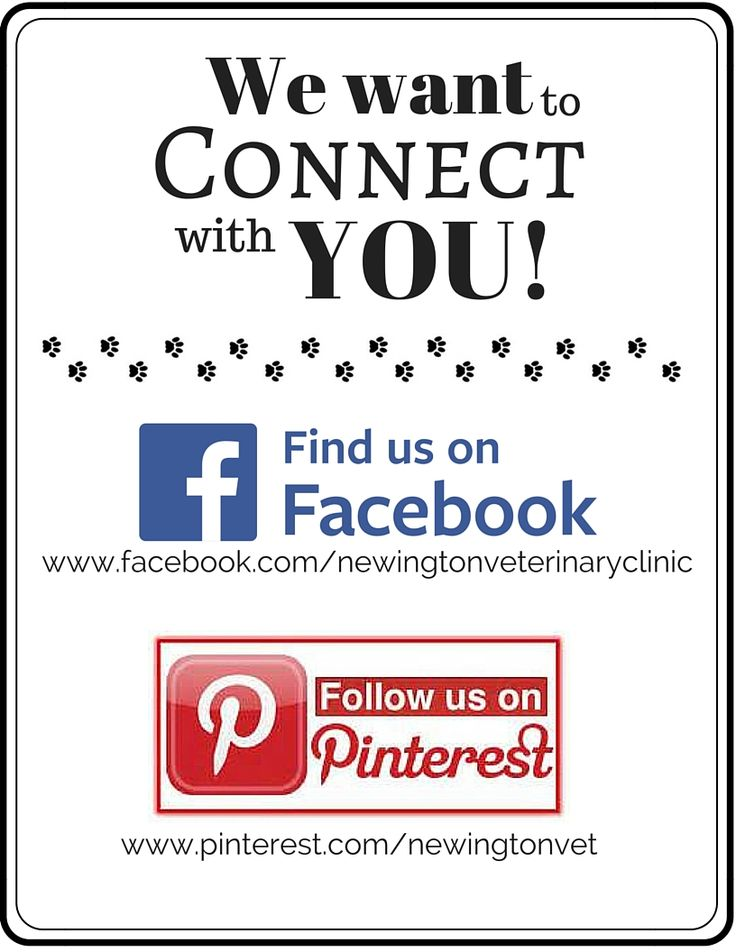 Pin by Newington Veterinary Clinic on All About Newington