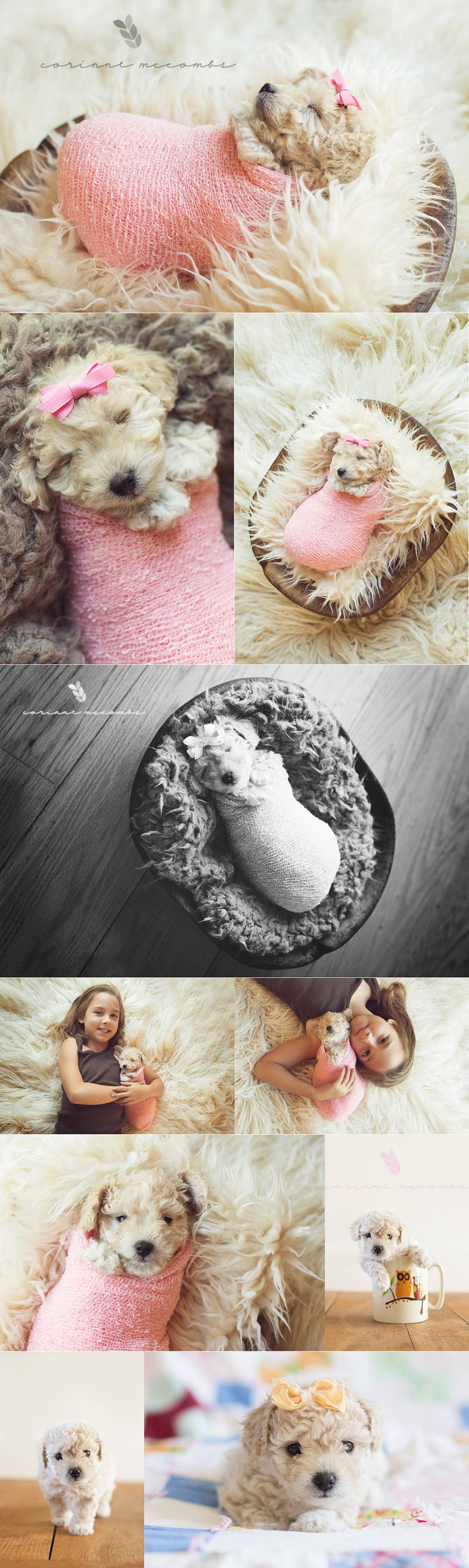 So much cuteness! Newborn session of a puppy! Shot by the amazing Corinne Mccombs! Photo shoot poodle baby cute adorable