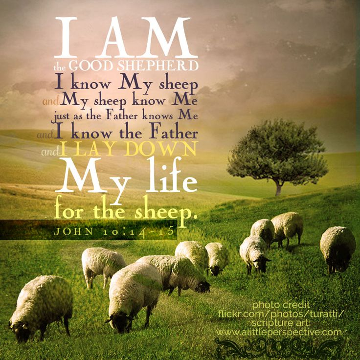 """""""I am the Good Shepherd. I know My sheep and My sheep know Me, just as the Father knows Me and I know the Father, and I lay down My life for the sheep."""" Joh 10:14-15. <3"""