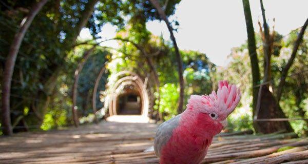 Day Trips: Birds of Eden
