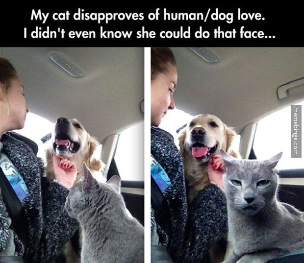 Cat Doesn T Approve Of Human Dog Love