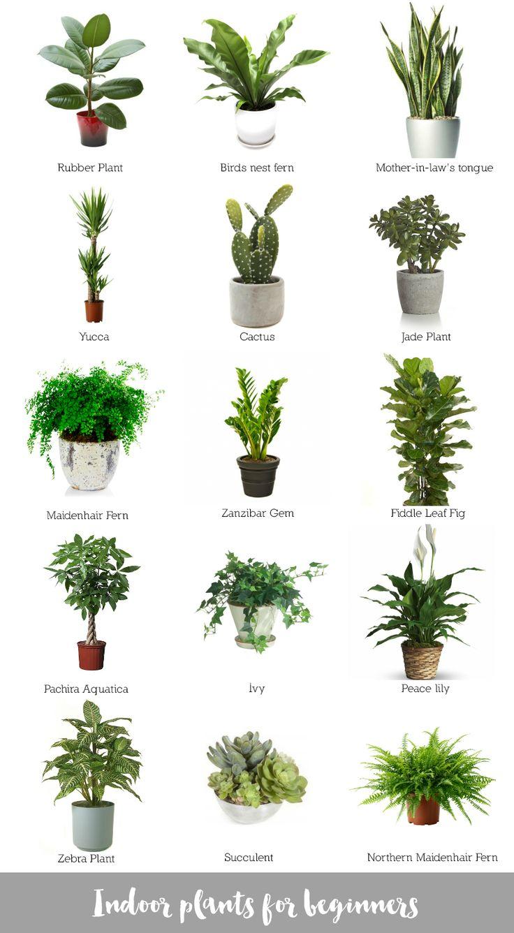 Indoor Plants For Beginners House Plants Pinterest 400 x 300