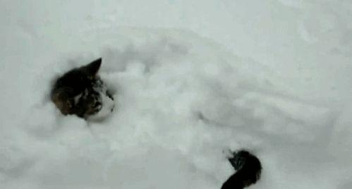 cat in snow gif
