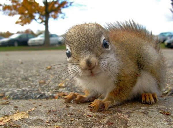 : Animal Squirrels, Abrahamhick Quotes, Wild Life, Critter, Leave, Animal Kingdom, Baby Squirrels, God Creatures, Adorable Animal