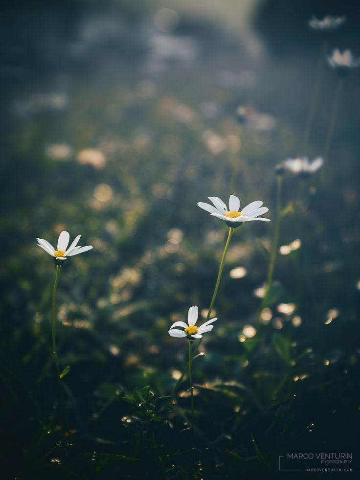 Oggi ufficialmente sono entrato nella stagione delle lunghe ombre… il freddo che stamattina mi pungeva le braccia scoperte ne è un segno inequivocabile. I fiori che ancora indugiano per i pra…