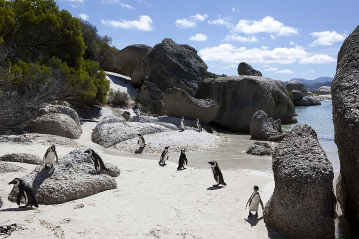 Just one more reason why you need to go to South Afrika! // Penguins in Cape Town, South Africa