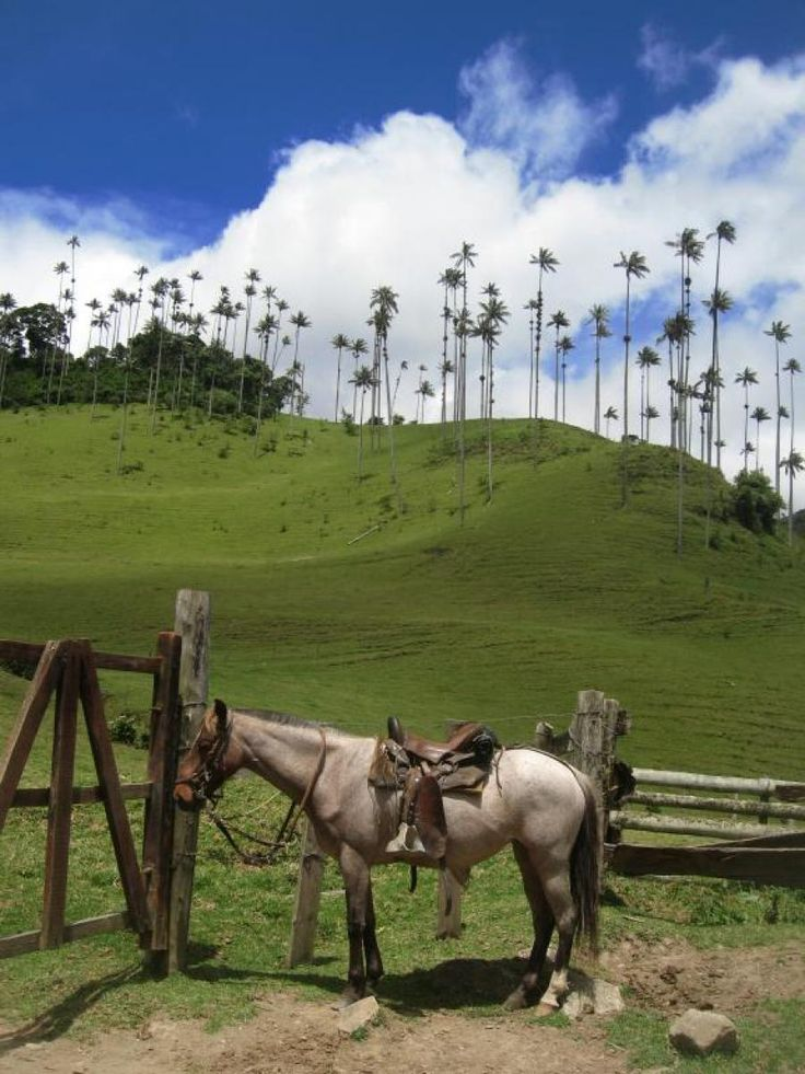 Ready to ride - Cocora Valley, Colombia | Traveldudes.org