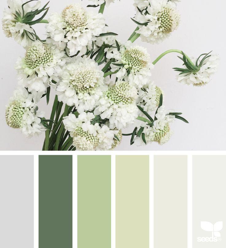 Flora Archives | Design Seeds