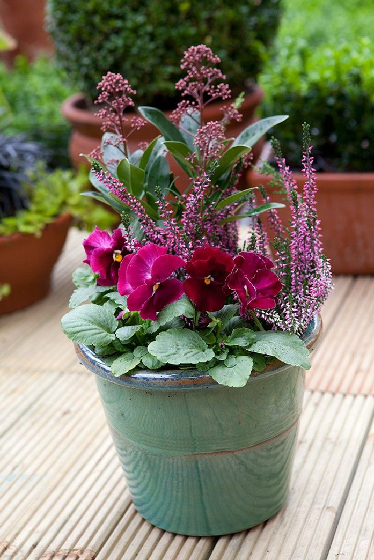 36+ Finest Winter Container Gardening Concepts and Footage