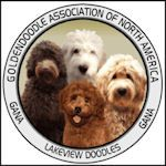 Lakeview's Goldendoodle Puppies New York/ Goldendoodle Breeder New York/ Mini Goldendoodles NY/ Standard Goldendoodle Puppies NY/ Labradoodle & Double Doodle Puppies NY/ Goldendoodles & Labradoodle Puppies New York breeders / Lakeview Doodles NY/ Mini Lab
