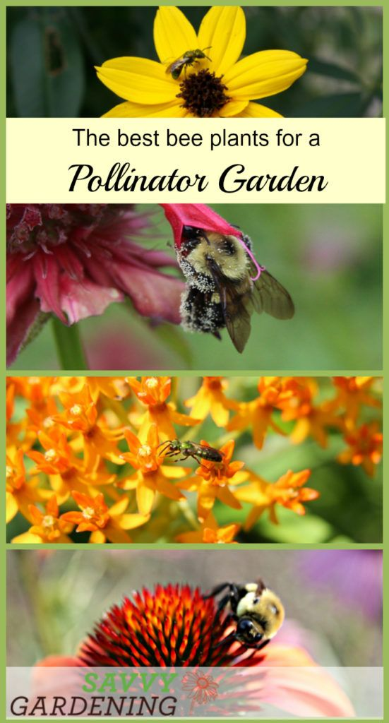 Edible Garden Ideas casual kitchen garden Choosing The Best Bee Plants For A Pollinator Garden