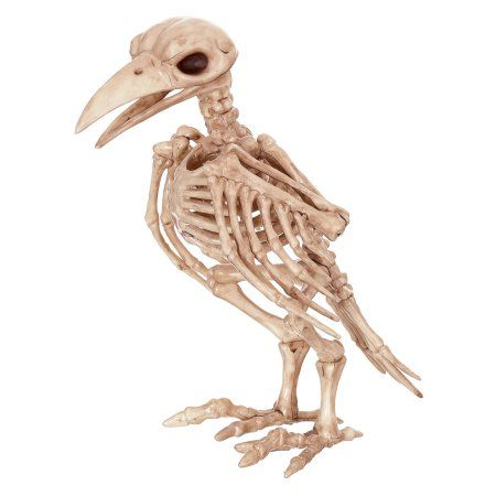 "8/"" Poseable Crow Fossil Skeleton Prop Halloween Decoration Fake Raven Parrot"