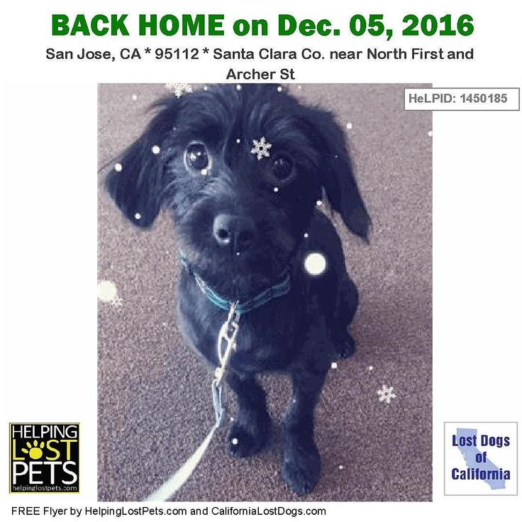 #BACKHOME Riley - #Terrier Mix from #SanJose #CA has been reunited with his family. Lost Nov 29 2016. Back home: Dec.05 2016. Welcome home Riley! Message from owner: Now that I can breathe here's what happened: Riley escaped last Tuesday and with our amazing community's help we posted over 600 fliers throughout the South Bay and talked to hundreds of people. Shout out to Jake's Wish Dog Rescue and all of their volunteers as well! Today I got an alert that his microchip had been scanned and…