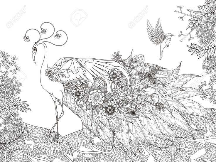 16 best Coloring Wallpaper Murals images on Pinterest Coloring - fresh detailed peacock coloring pages