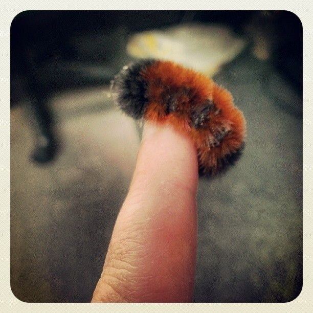 """""""Am I holding hands right?""""   17 Fuzzy Caterpillars Who Just Want To Be Loved"""
