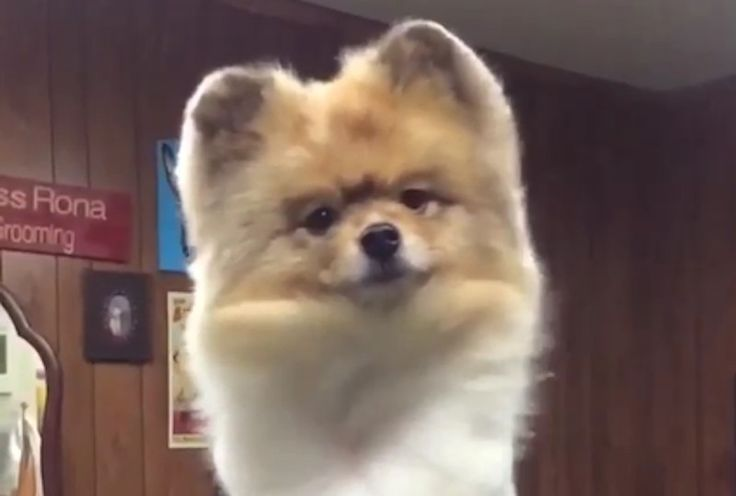 These dogs are embracing their inner diva in slow-motion, and it's hilarious.