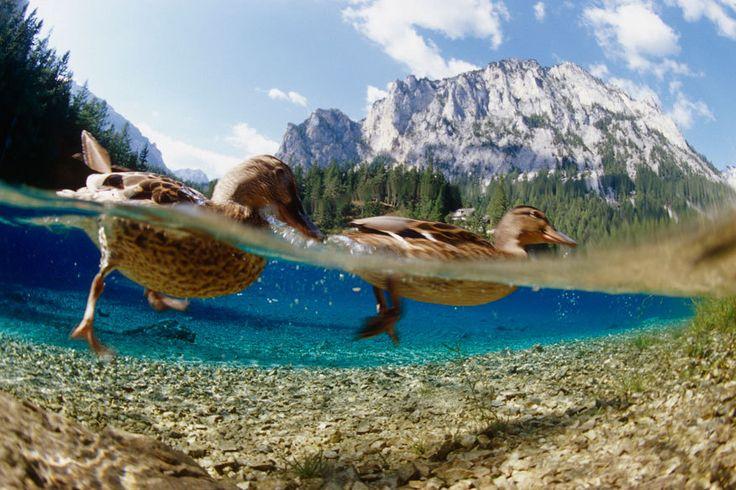 Grüner See, Steiermark: Im Winter Park, im Sommer See