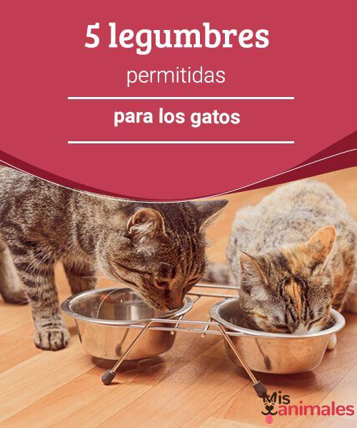 5 legumbres permitidas para los gatos - Mis animales  Si eres de los que prefiere alimentar a sus mascotas con dieta casera, veamos algunas de las hortalizas y legumbres permitidas para los gatos.