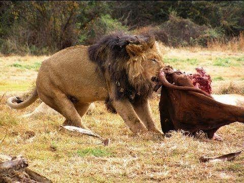 Documentary Animals - WILD Life National Geographic 2015 - Amazing Africa