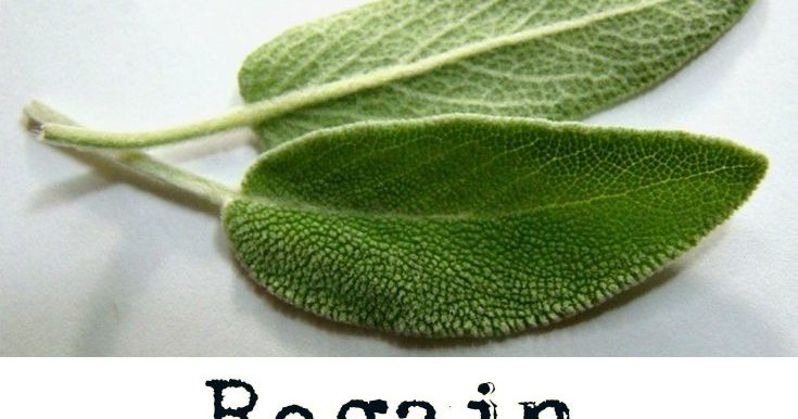Sage is one of the oldest medicinal plants being used since ancient Egypt. By then it was used to stop bleeding wounds and for disinfecti...