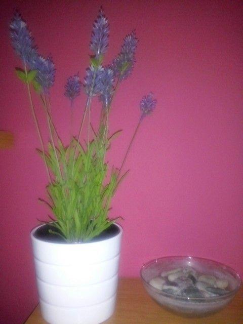 Mi nueva planta