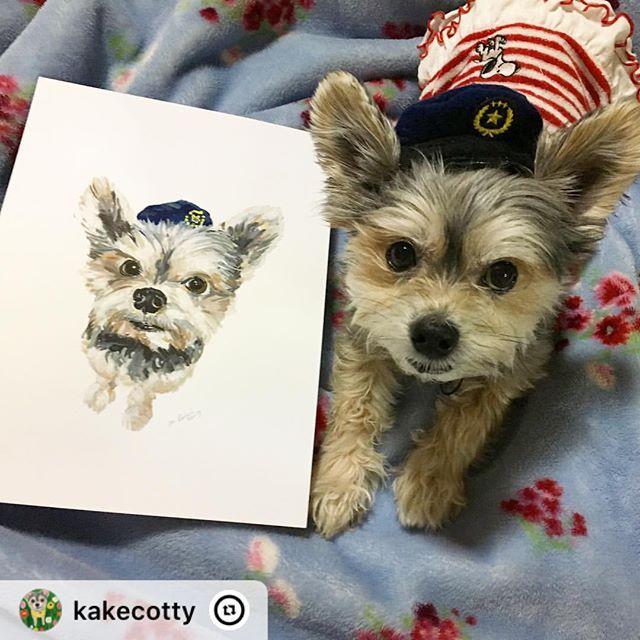"""・・・ """"@mdogcolor さんに描いてもらったコッティーと本物のコッティー💕素敵すぎるしそっくり😍ありがとうございますー。"""". @kakecotty #yokie #chihuahua  #illustration #petportrait #dogpainting  #etsy #etsyartist #etsyseller #custompetportrait #犬の絵 #ガッシュ  #イラスト#チワワ #ヨーキー"""