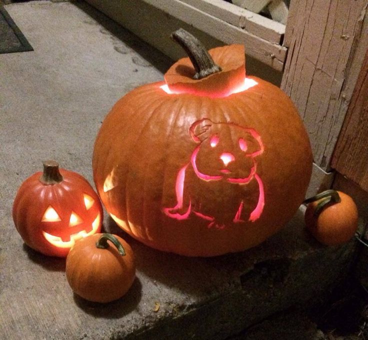 Pumpkin Carving Of A Guinea Pig Maybe For Next Year
