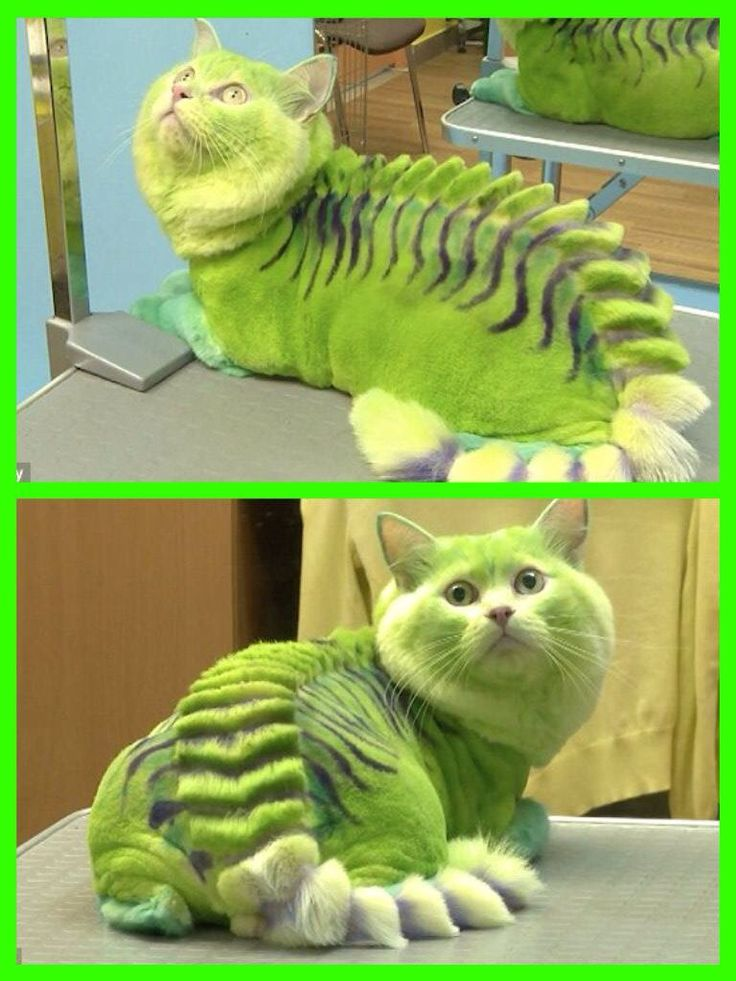 169 best images about Pet Grooming on Pinterest