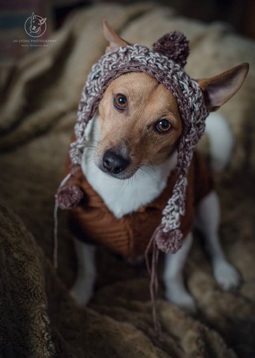 My friend Julie made a beanie for each of our #3dogkateers and each style will be named accordingly... The Daisy, The Luna and The Harvey. Here is Mr Harvey Chops looking very demure in his beanie on our weekend away <3 | by Jo Lyons Photography
