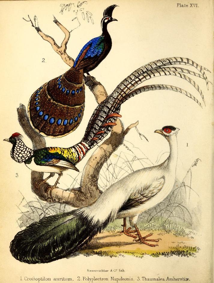 1855  - A popular history of birds : - Biodiversity Heritage Library